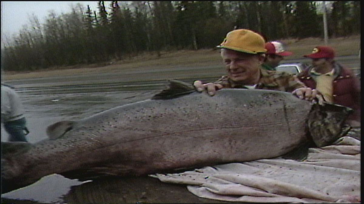 Les Anderson stands by his world-record king salmon in 1985. (KTUU)