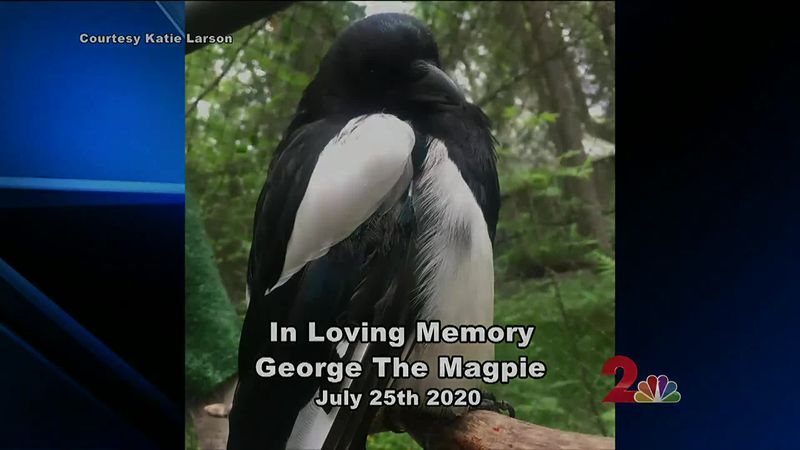 George, the bird who picked the zoo as her home