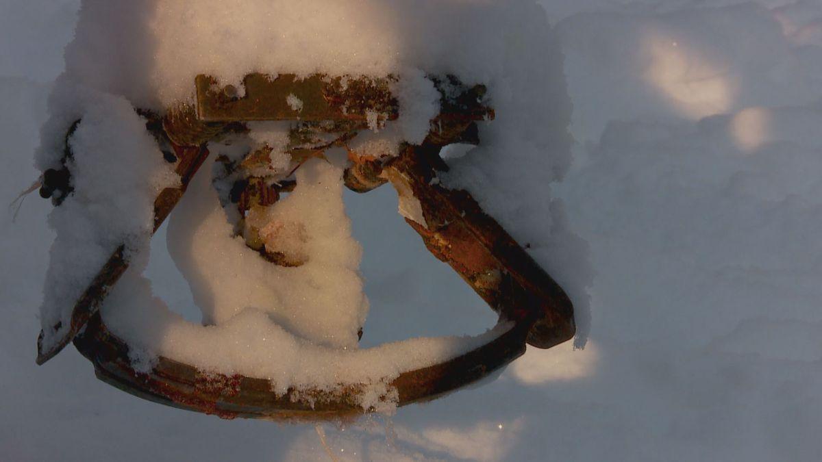 A lynx trap
