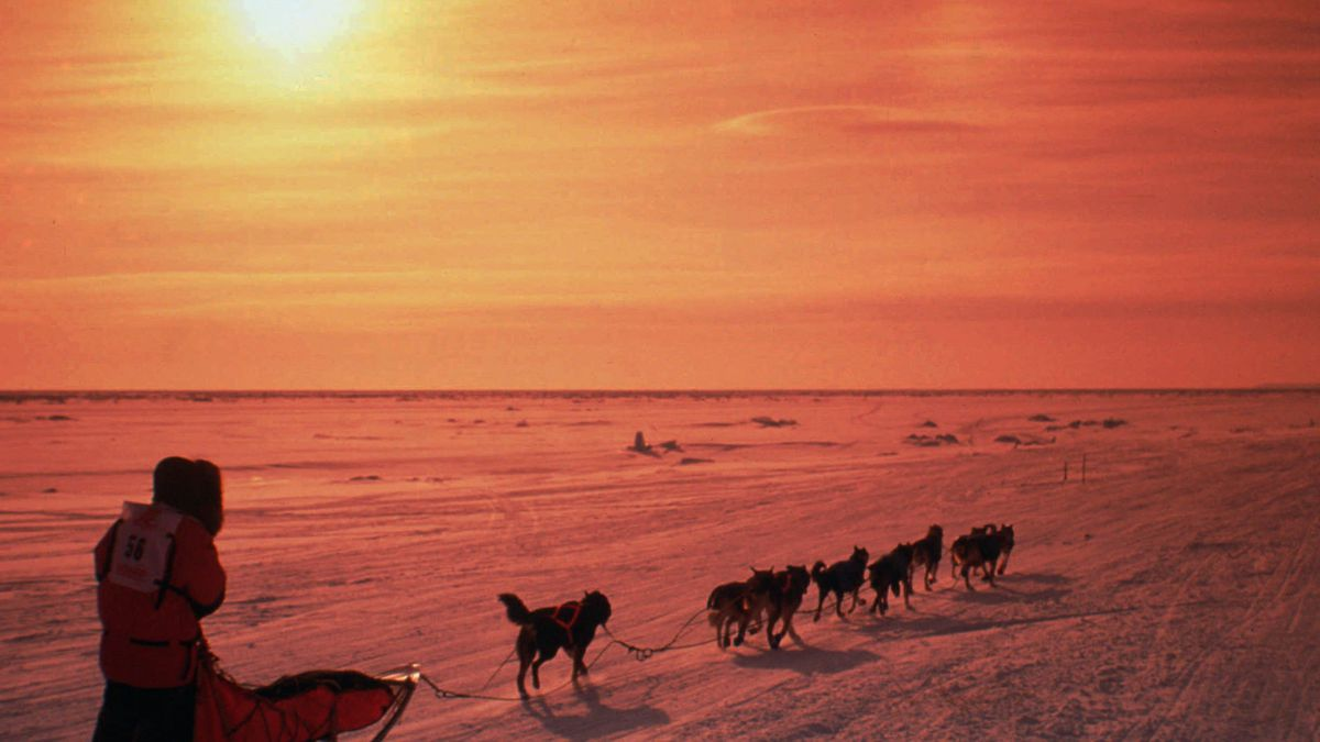 A musher drives his team across the frozen Norton Sound near Nome, Alaska,  during the...