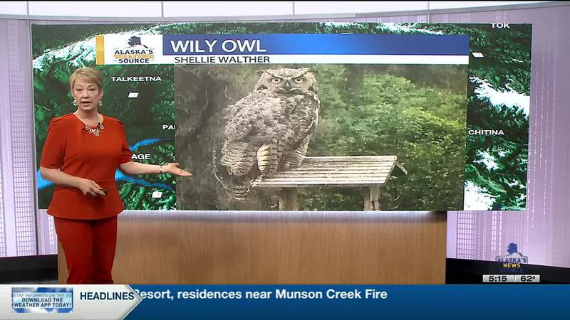 Wily Owl-Shellie Walther_JP-studio 7-14-21