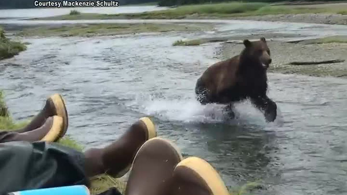 A group of people got a close look at a brown bear on Admiralty Island.