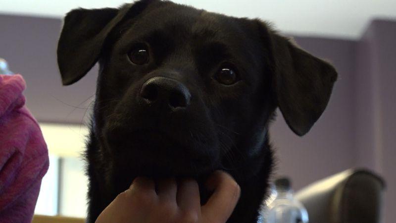 A new dog up for adoption at the Alaska SPCA Adoption Center, 6-month-old Milo from rural Alaska.