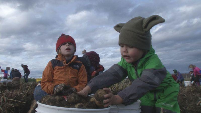 The Matanuska Experiment Farm opened its potato plots up to families who took home a combined...