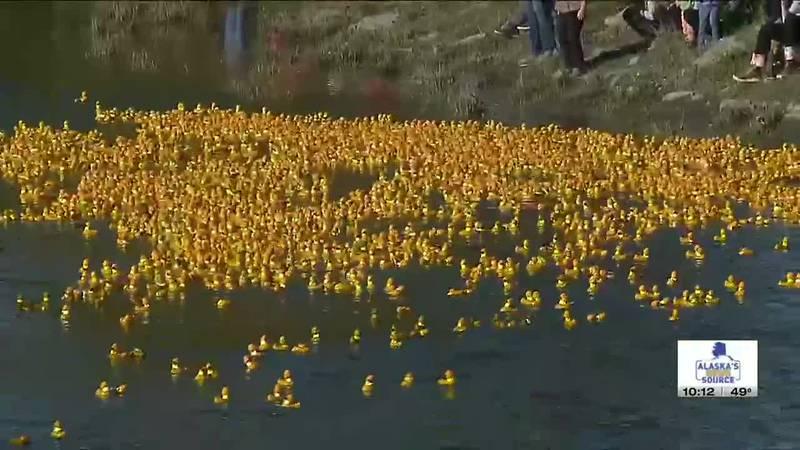 A sea of rubber ducks floats near the Ship Creek Overlook Park Bridge for the 2021 Great Alaska...