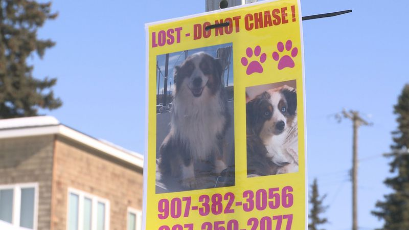 Two women caught on camera tearing down lost dog posters.