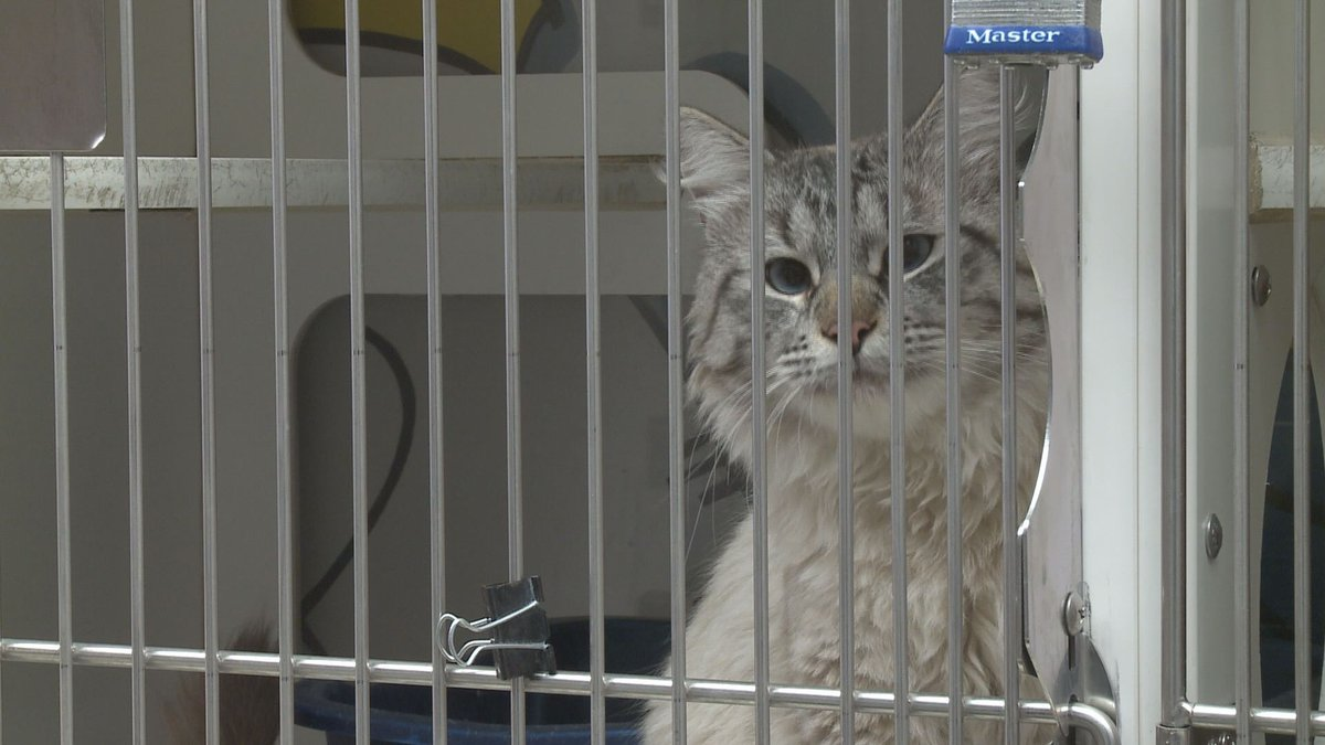 AACC teams with AnchorRIDES to help pet families