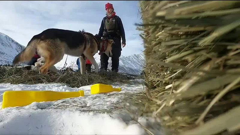Following the latest on the Iditarod including updates on Aliy Zirkle and new leader Brent Sass.