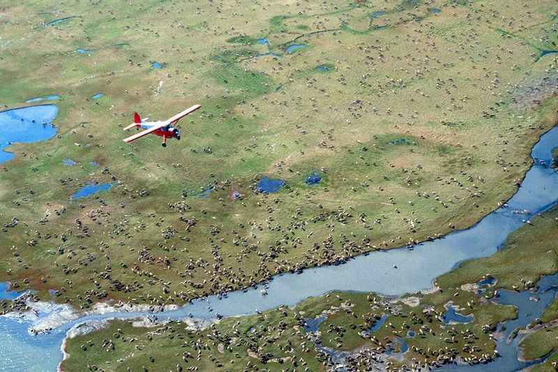 FILE - In this undated photo provided by the U.S. Fish and Wildlife Service, an airplane flies...