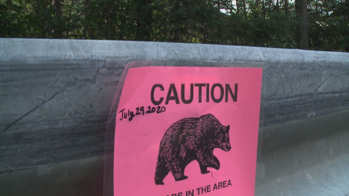 A man was killed in a bear attack July 29.