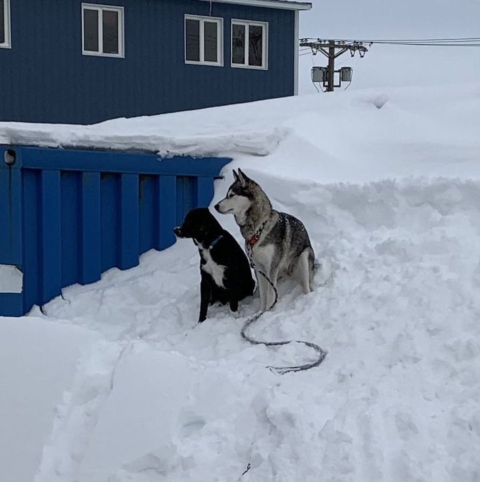 Two dogs sitting on a hill of drifted snow against a home in Nome!