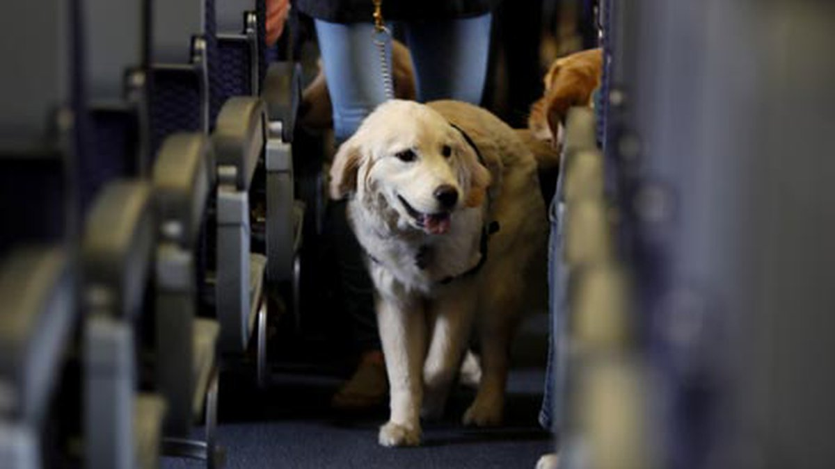 In this April 1, 2017 file photo, a service dog strolls through the aisle inside a United...