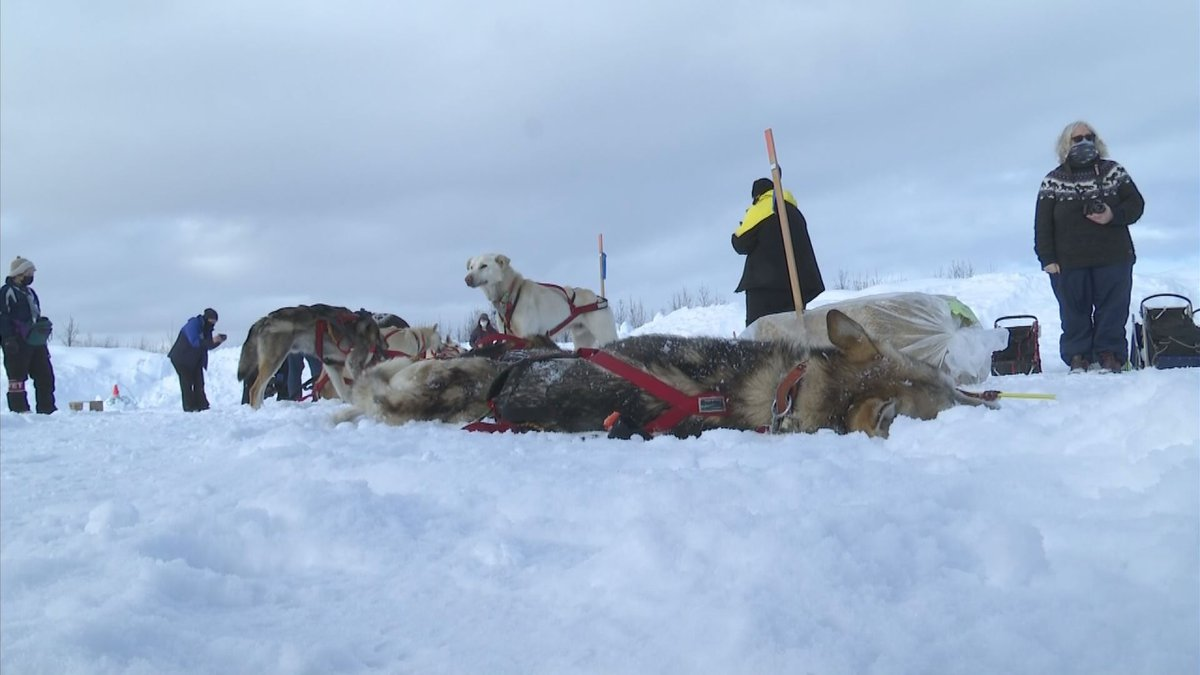Warm, comfortable and with access to electricity, all of the top five mushers into the McGrath...