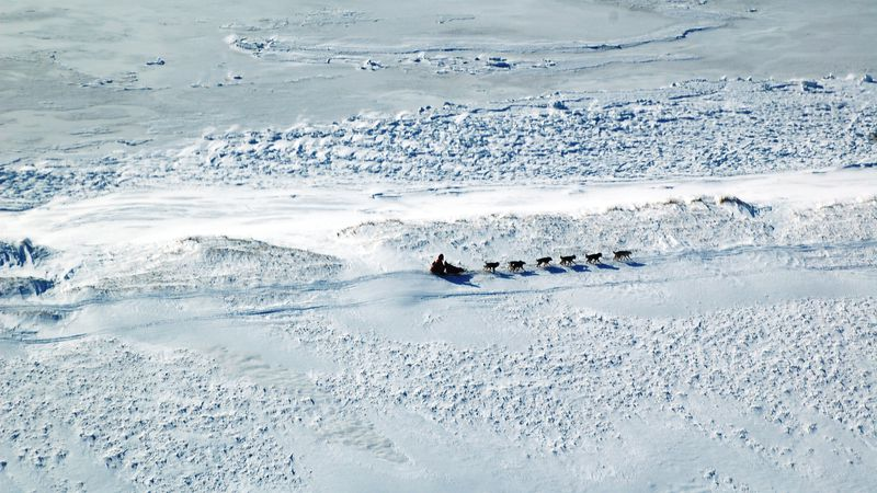 Musher races along the Iditarod trail in the 2020 race. (Tracy Sabo/KTUU)
