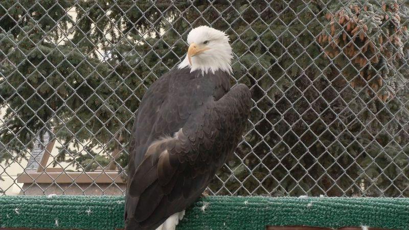 JBER Eagle Aviary next to the Yukla memorial