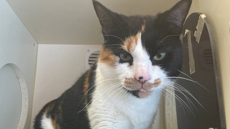 Jackie, a 5 year old female cat is this week's Pet Project feature.