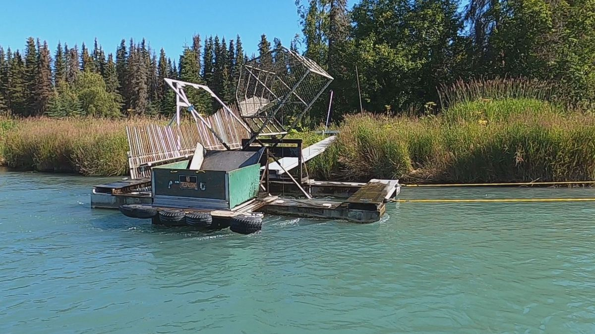 ADF&G uses a fish wheel at river mile 19 to determine the proportion of the different salmon species moving upstream.