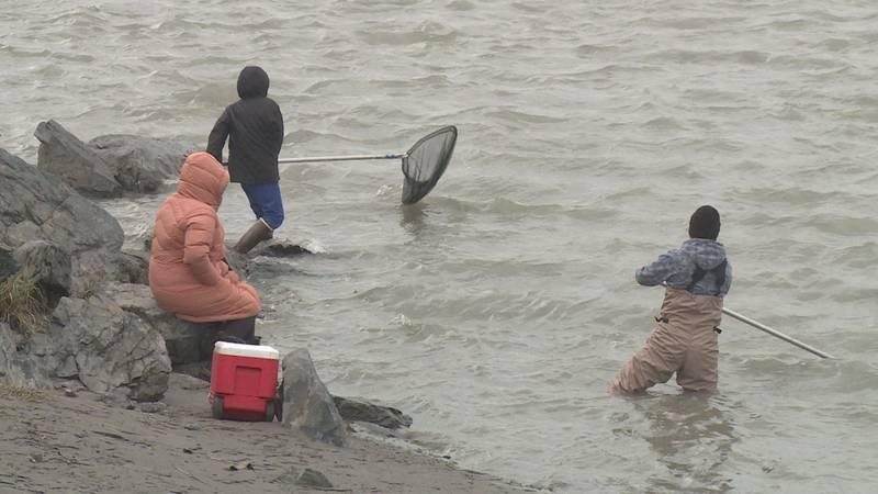 People dip net for Hooligan off the banks of the Twentymile River.
