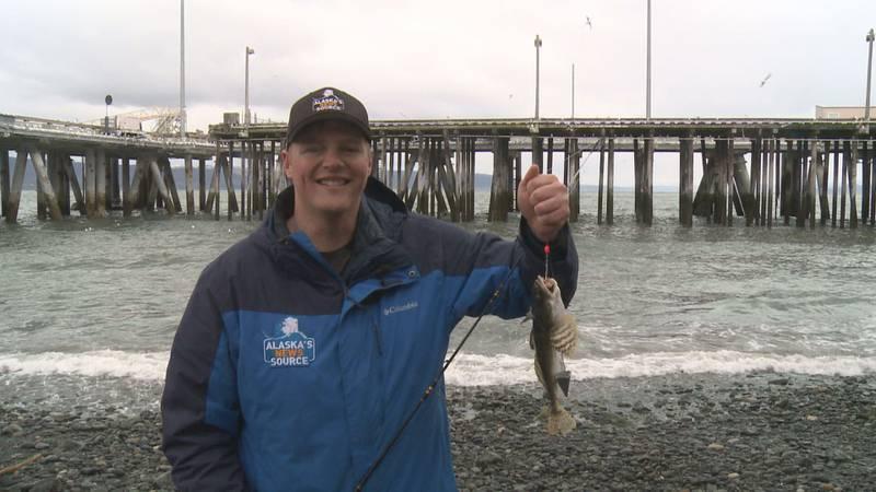 Homer Fishing Report
