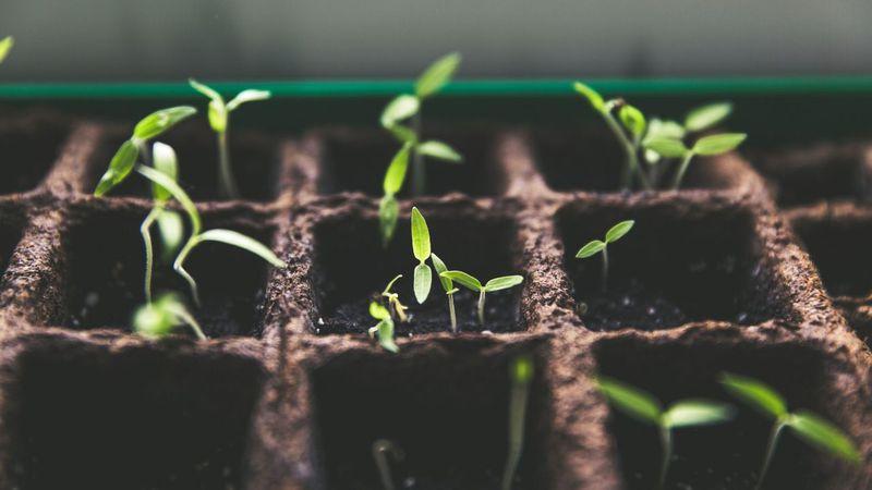 Young seedlings. (Pexels Image)