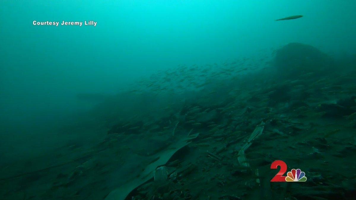 Fish swim over debris at Smitty's Cove. February 15, 2020.