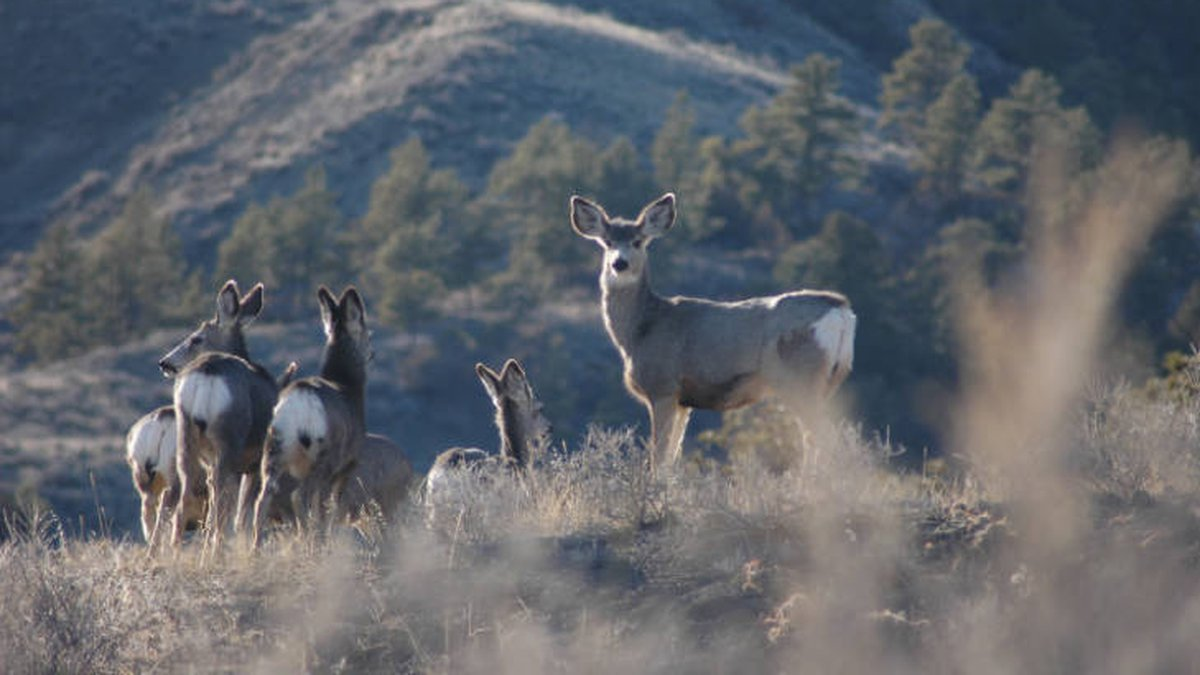 Photo from US Fish & Wildlife Service