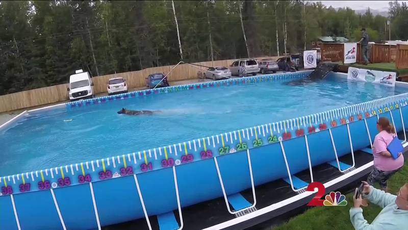 Summer has gone to the dogs. Some eager pups were getting their swim on in a dock diving...