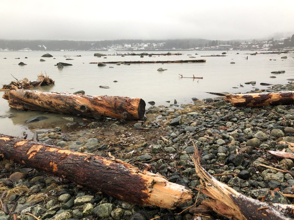 Haines shorelines filled with debris