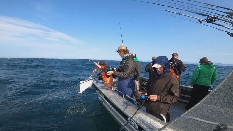 A deckhand lands a halibut on a charter fishing trip.