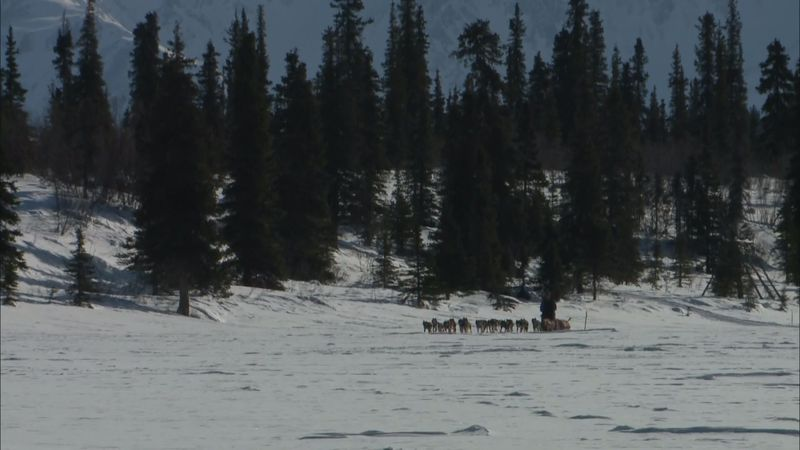 Iditarod musher in Alaska.