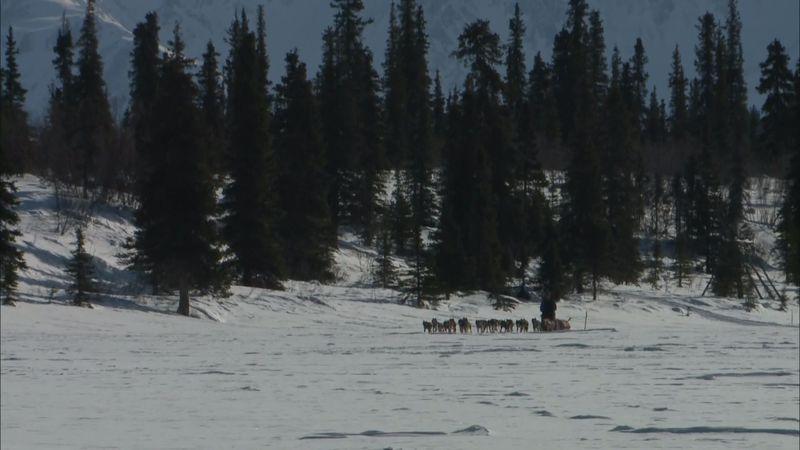 Iditarod musher in Alaska.