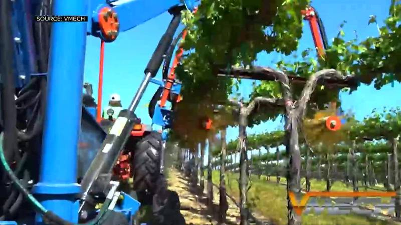 More grape growers are turning to technology to harvest and maintain crops.