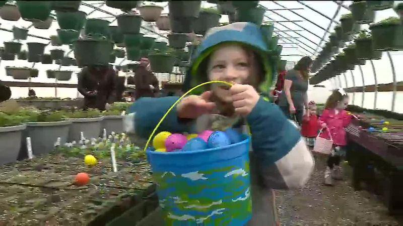 A community egg hunt was held at a greenhouse in Wasilla on April 3, 2021.
