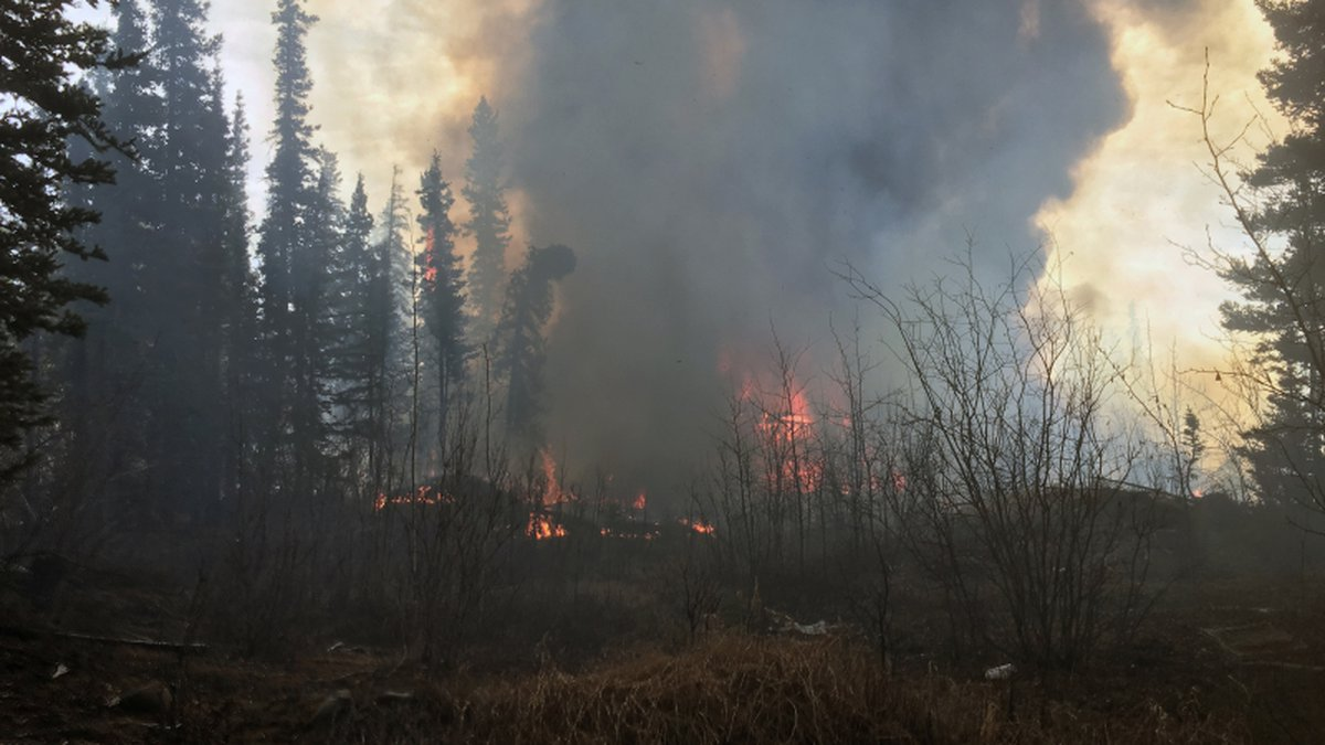 Flames can seen from a 2-acre wildfire burning in the woods near downtown Glennallen on...