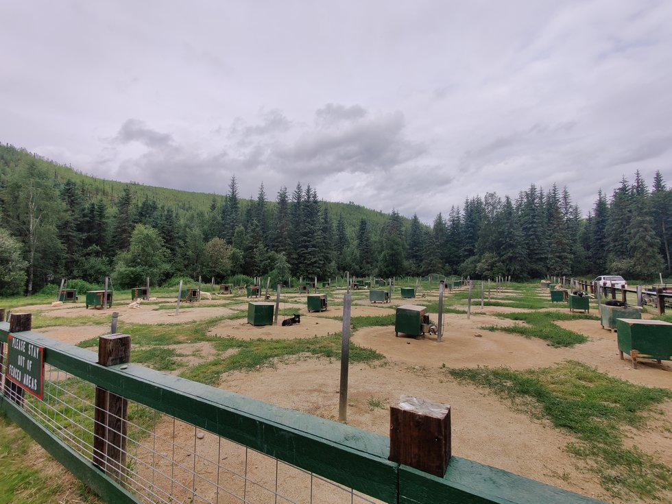 Dog kennels at the Chena Hot Springs Resort on Tuesday July 6, 2021.