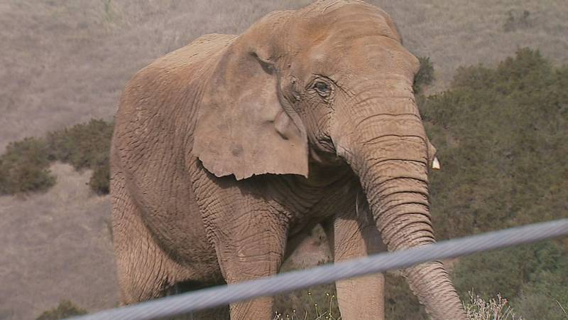Maggie the elephant, who once graced the grounds at the Alaska Zoo, is reported to have died...