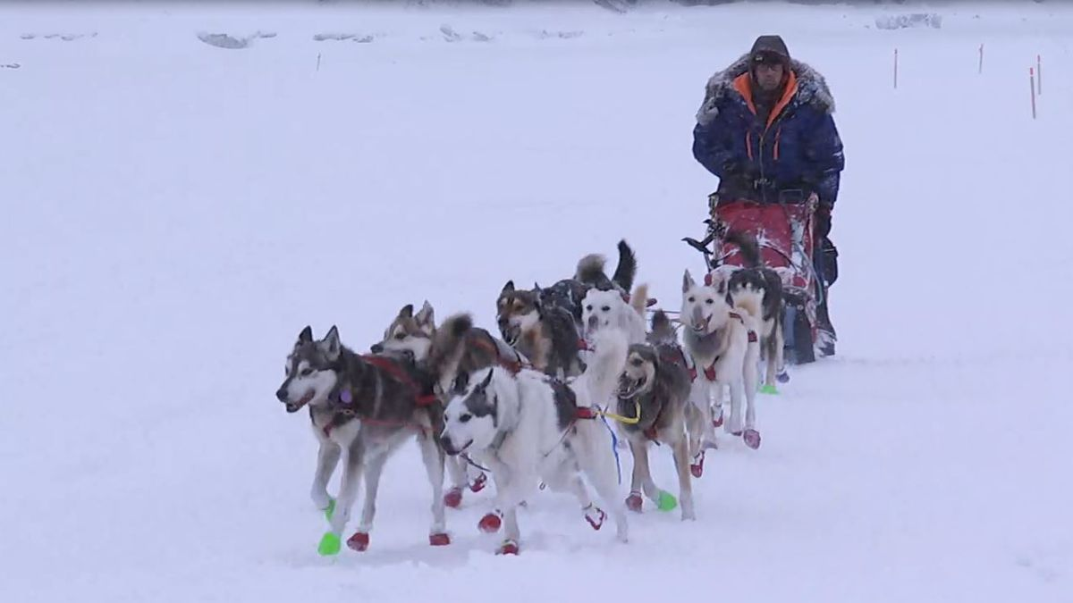 Mitch Seavey pulls into White Mountain during the 2020 Iditarod.