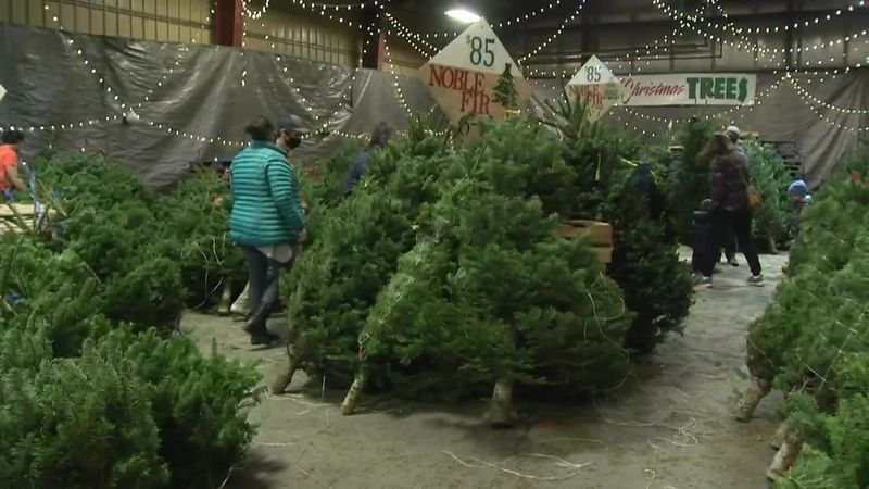 Shoppers flock to Anchorage Mill and Feed looking for Christmas trees, which are in short...