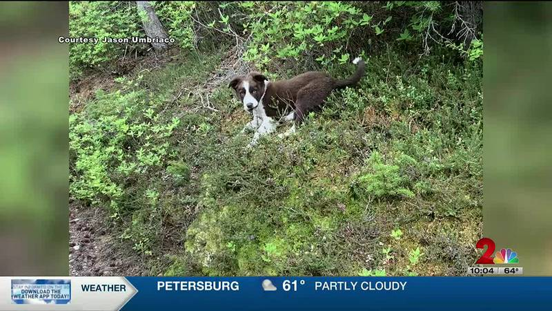 Man and his dog reunited after bear attack