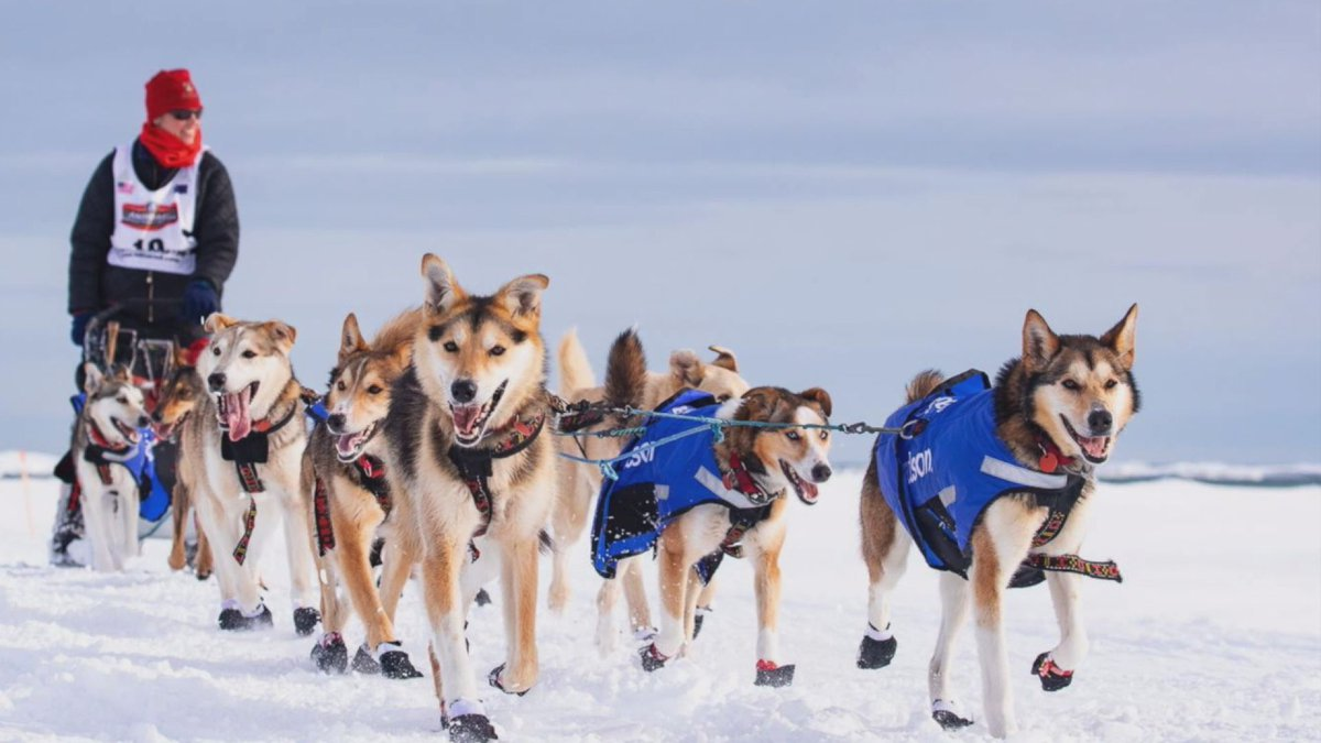 Musher Aliy Zirkle also created Husky Homeroom, a weekly virtual field trip for students and...
