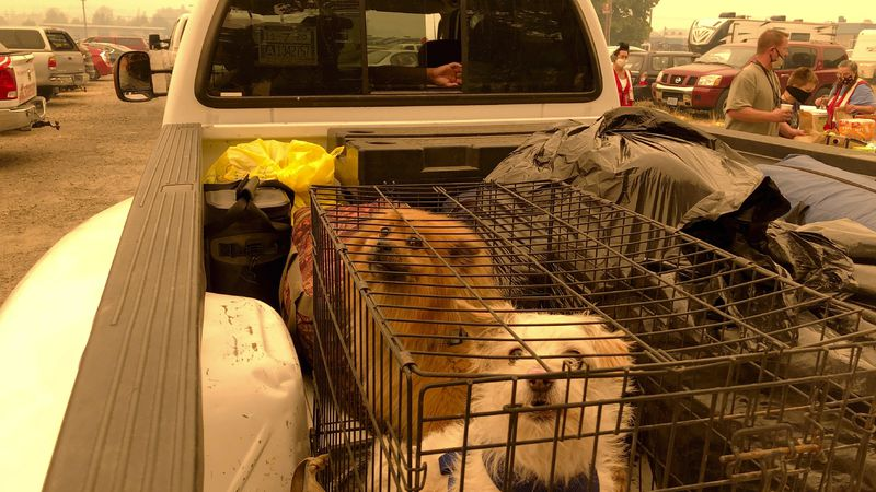 A family arrives with their two dogs and other precious belongings at an evacuation center that...