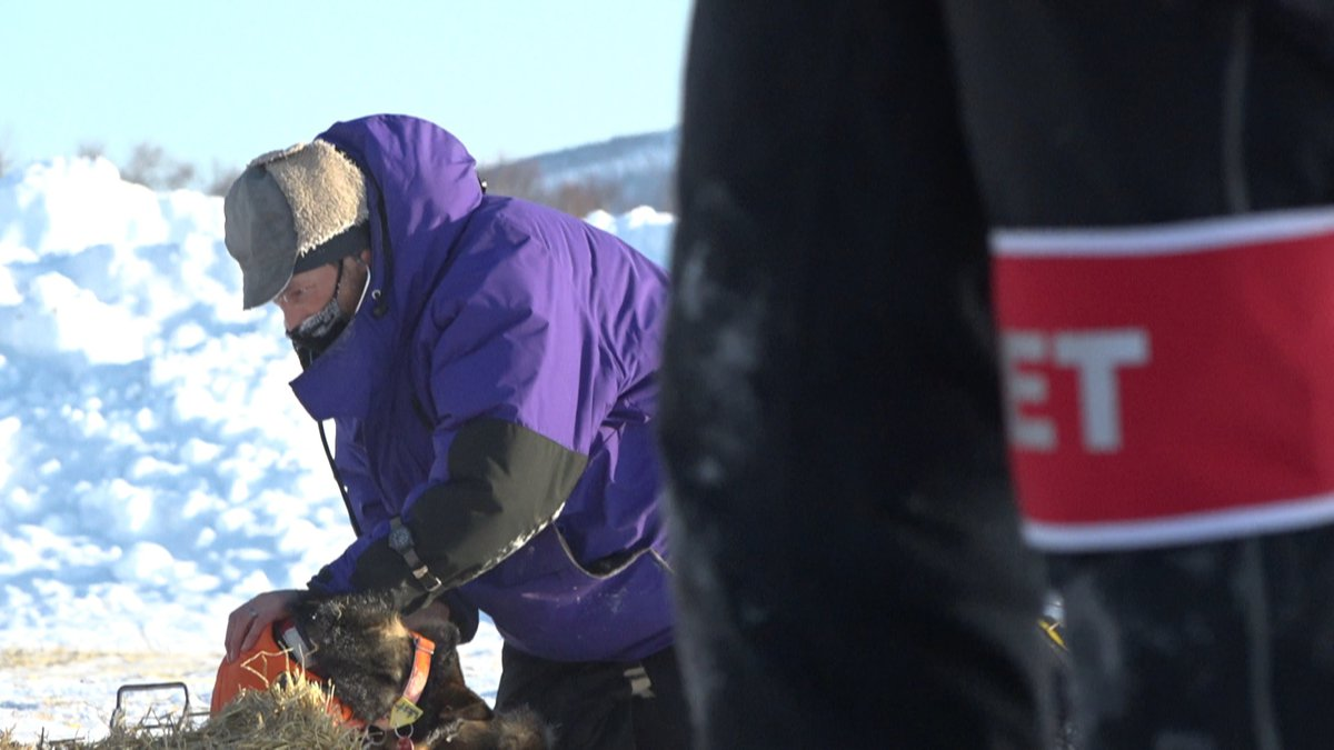 Iditarod Veterinarians keep teams healthy on the trail.