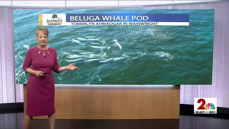 The evening weather with Jackie Purcell.