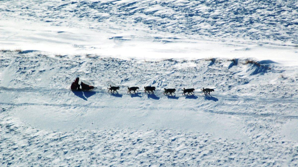 Mitch Seavey on the trail near Elim, far in the Iditarod lead. (Tracy Sabo / KTUU)