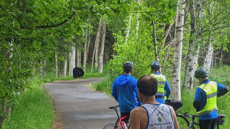 A black bear on the Mayor's Marathon course causes runners to stop.