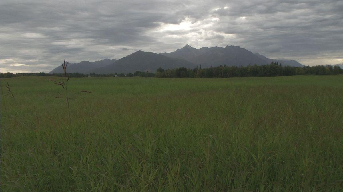 Alaska Farmland Trust is raising funds to preserve a 95-acre parcel on the Moffitt's property...