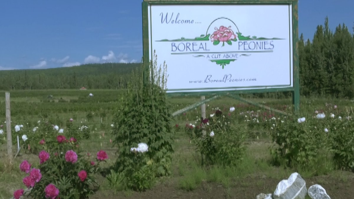 Two research scientists who are also peony farmers are conducting research to find optimal...