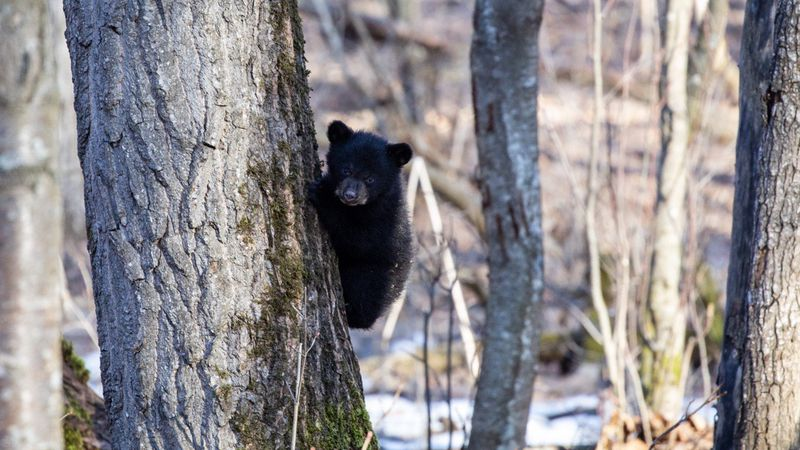 The Alaska Department of Fish and Game is cautioning people to be careful around newborn...