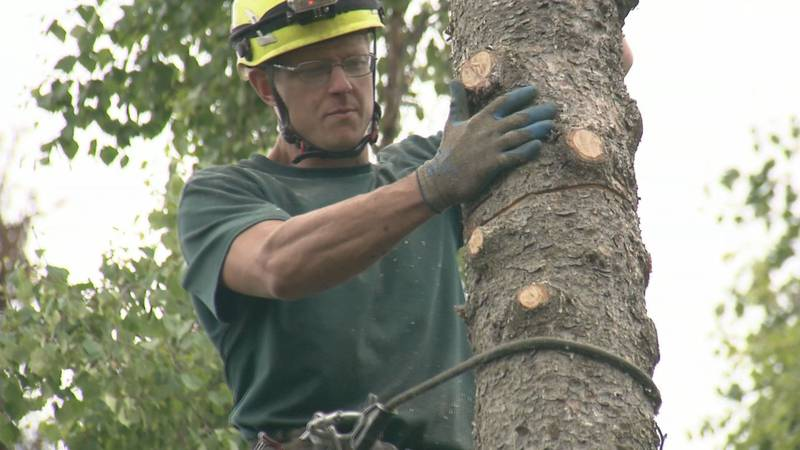 Paul Guzenski, owner of Paul's Tree Service started a nonprofit in memory of his mom who died...