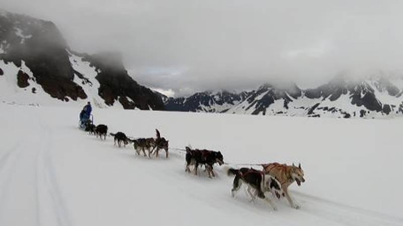 A dog team passes by at Turning Heads Kennel in Seward, Alaska in May, 2021.